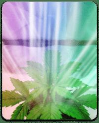 גלי אור שונים והשפעתם על גידול צמחים