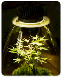 שטח כיסוי אפקטיבי של תאורה לצמחים